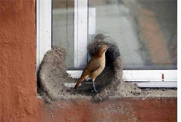 Cận cảnh công trình tổ ấm do kiến trúc sư chim tự tay xây dựng
