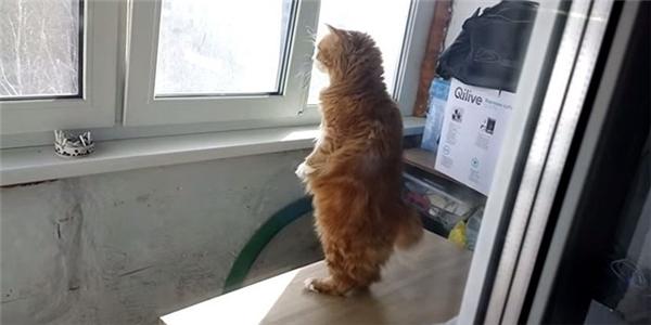 Thỉnh thoảng cũng có những ngày cậu chủ được tha cho, vì George bận phánxét nhà hàng xóm.