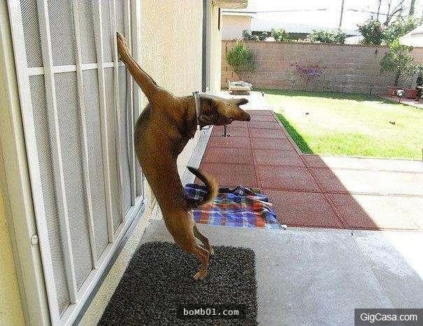 Mở cửa, mở cửa raaaaaaa!