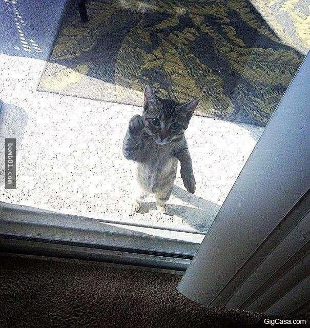 Có ai ở nhà không? Lịch sự gõ cửa nãy giờ sao không ai ra mở là sao?