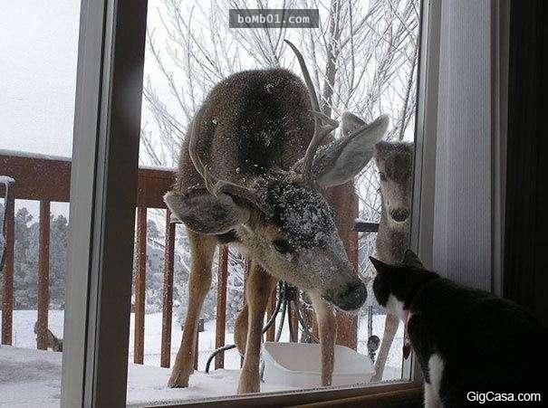 Hello, tụi tui là hàng xóm mới, cho vô uống chén trà được không?