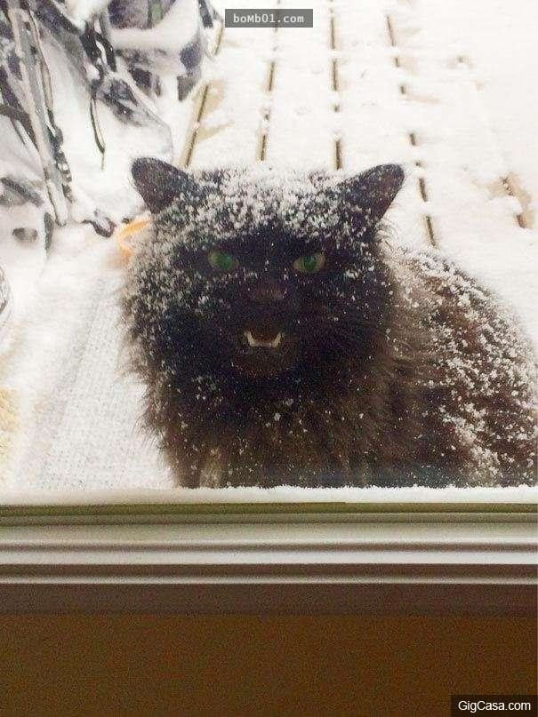 Sắp bị đóng băng thành tượng mèo tuyết rồi nè.