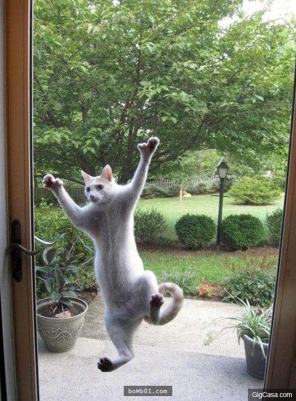 Tui là con nhện-mèo, xem xiếc xong rồi nhớ mở cửa cho tui nha.
