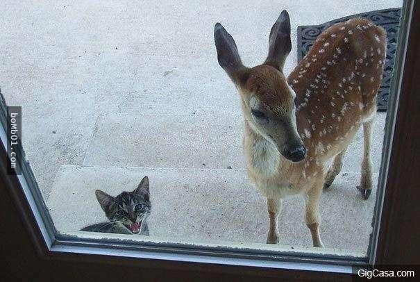 Mở cửa ra, bạn tui tới thăm sao nhốt ở ngoài, kì quá à.