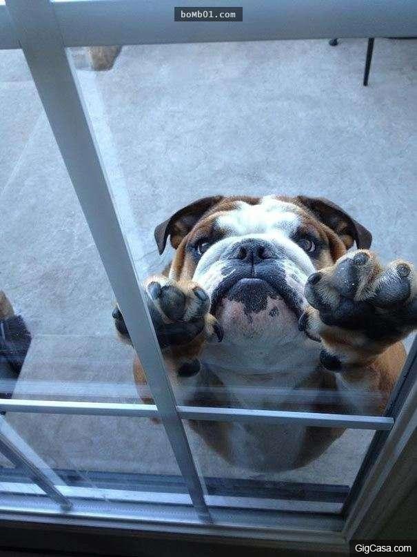 Mị đã già và mị muốn vào nhà.