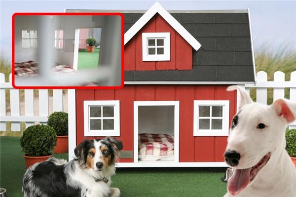 Thích cuộc sống đơn giản, không cầu kì nhưng vẫn thoải mái, chủ nhân của chú chó này đã xây một căn nhà theo kiểu tá điền cho chú, trị giá 2.200$ (khoảng 49 triệu đồng). Nhìn thì thấy khá đơn giản, nhưng thật ra không phải đâu nhé, bên ngoài ngôi nhà được quét bằng lớp sơn chịu được cả mưa nắng, còn thêm lớp phủ nhựa bitum, độ bền rất cao đấy. (Ảnh Barkpost)