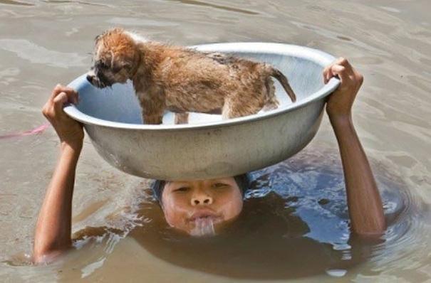 Cậu bé người Philippines cố gắng đưa chú chó cưng qua vùng nước lũ.