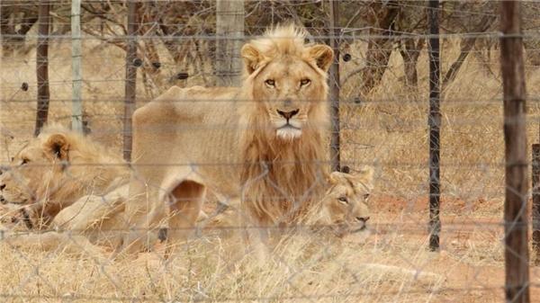 Những bức ảnh đang gây rúng động xã hội này được chụp bởi Drew Abrahamson, CEO của Tổ chức bị bắt giữ ở châu Phi.
