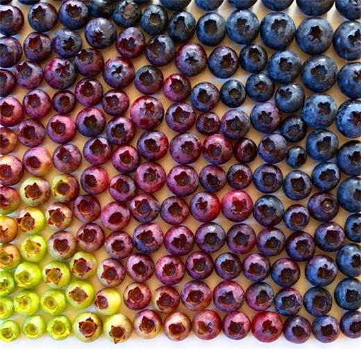 Bản phối màu hoàn hảotừcác cấp độ chín của những trái việt quất.