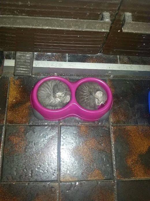Khi bát ăn trở thành nơi ngủ hoàn hảo dành cho những chú mèo.