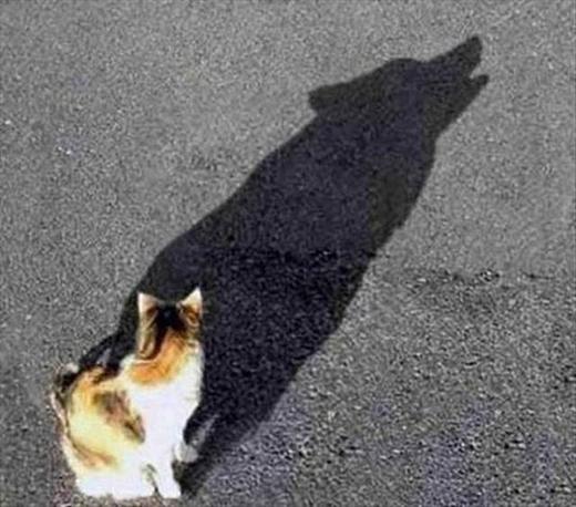 Cuối cùng đây là chó hay mèo?