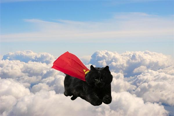 Anh là Super Meo đây.