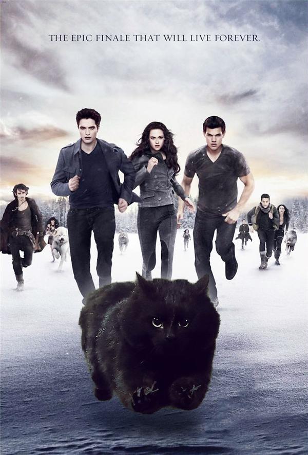 Dù anh là mèo nhưng anh vẫn theo phe của chó chống lại bọn dơi hút máu nhé.