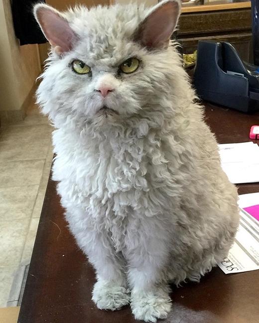 """Ở chú, thái độ """"tự tôn"""" của loài mèo được thể hiện ngay trên mặt."""