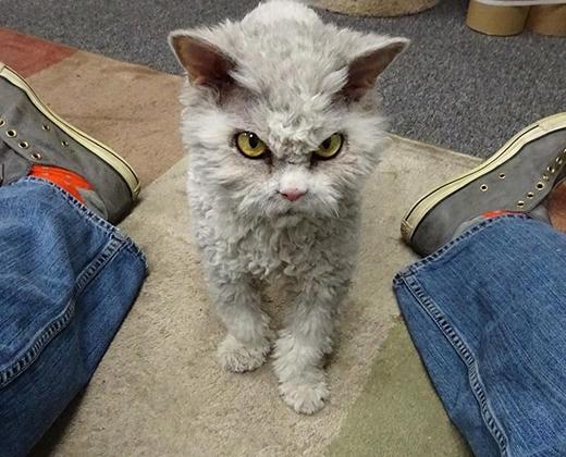 Run sợ chú mèo trừng mắt nhìn chủ như muốn ăn tươi nuốt sống