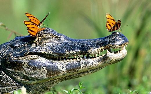 Tuy đây chỉ là một hiện tượng tự nhiên nhưng nó cũng thể hiện sự quan tâm giữa các con vật với nhau.