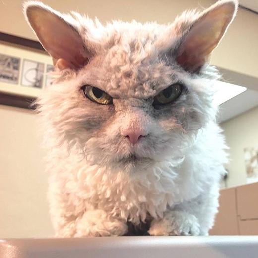 """Đây chính là vẻ mặt """"Vừa nói cái gì thế?"""" của Albert."""