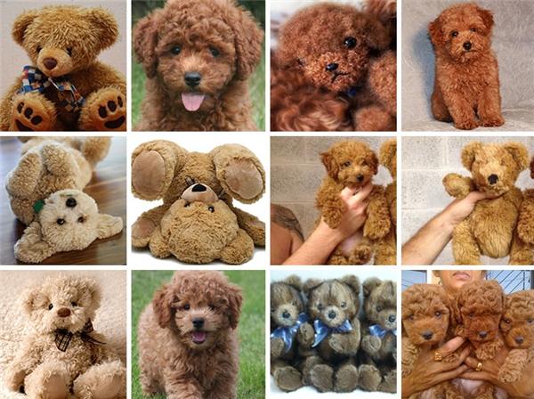 Hay là giống mấy em gấu bông hơn nhỉ?
