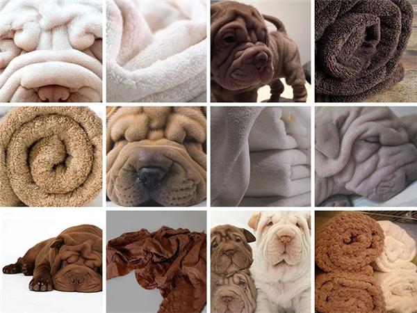 Hay những chiếc chăn lông nhàu nhĩ?