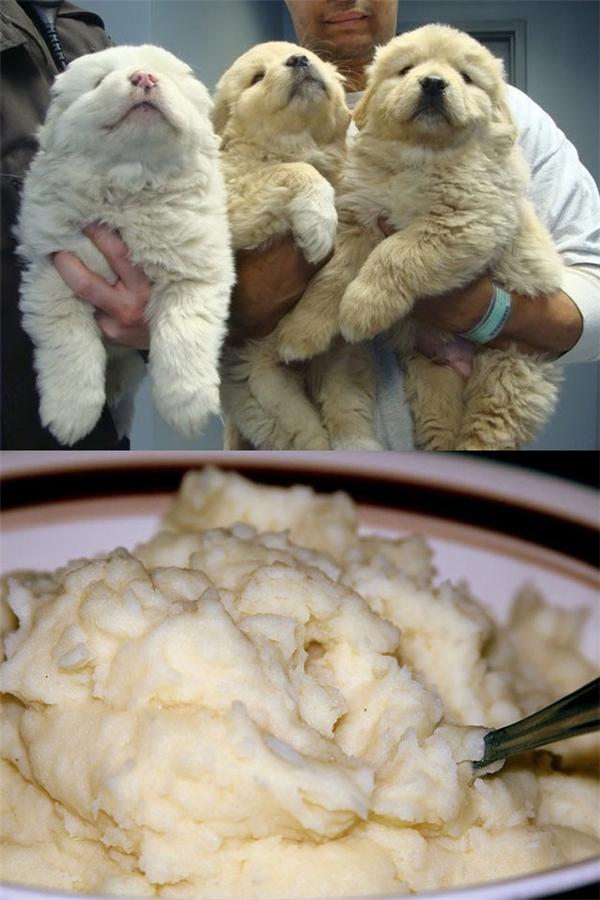 Bộ lông của chúng nó chẳng khác nào món khoai tây nghiền cả.