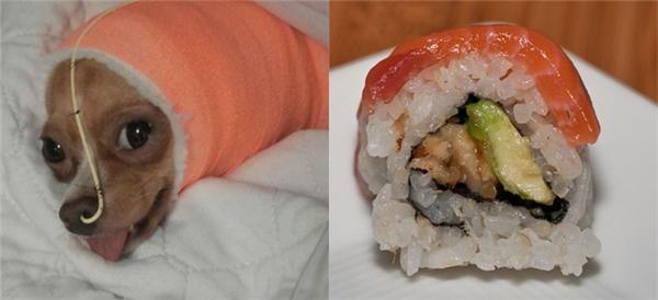 Thậm chí nó nằm giường bệnh mà người ta còn liên tưởng đến một miếng sushi luôn kìa.