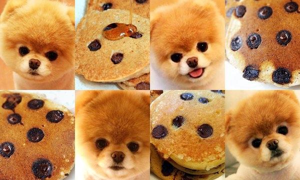 Những chú Pomeranian nâu xù với cặp mắt và chiếc mũi đen lay láy trông chẳng khác nào những miếng pancake điểm xuyến những hạt socola đen hay việt quất.