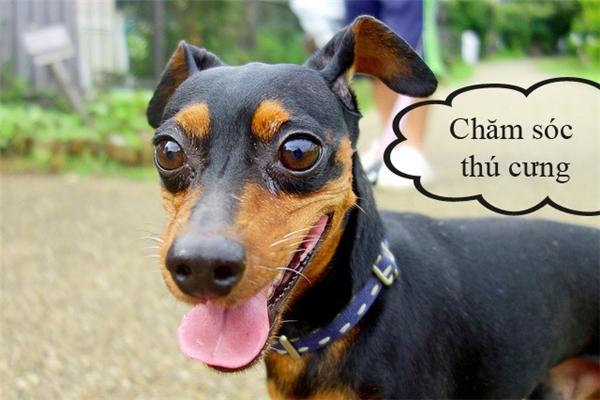 """Yêu thích động vật... bạn có thể mở dịch vụ chăm sóc """"thú cưng""""cho những người bận rộn."""