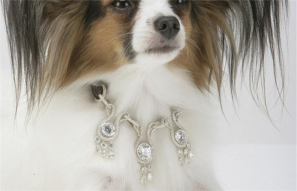 Không chỉ những tiểu thư hay thiếu gia nhà giàu mới có cơ hội sử dụng những sản phẩm đắt tiền, cả thú cưng trong các gia đình triệu phú cũng được hưởng cuộc sống sang chảnh đáng mơ ước.Bằng chứng là chiếc vòng cổ mang tên Amour Amour Dog Collar có giá trị lên đến 3 triệu USD (67 tỉVND). Chiếc vòng được thiết kế theo kiểu đèn chùm với trung tâm là một viên kim cương 7 carat lấp lánh, dây của vòng cổ được làm từ da cá sấu và vàng trắng 18 carat.