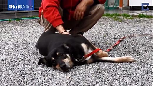 Xúc động câu chuyện chú chó hoá đá lột xác sau khi được cứu