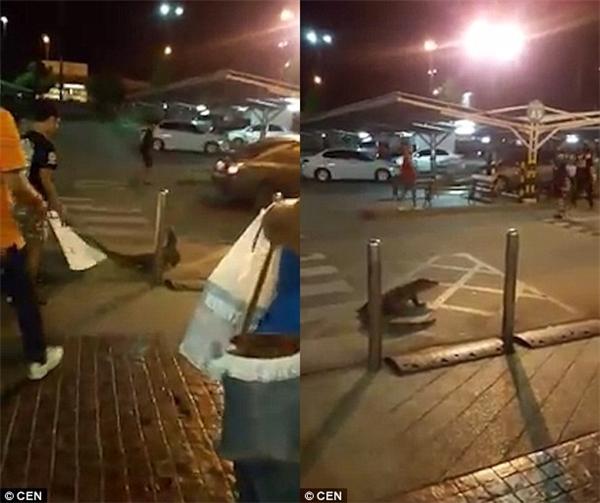 """Cuối đoạn clip, hai nhân viên cũng đã """"tiễn khách"""" thành công, chú thằn lằn bơ vơ trước bãi đậu xe.(Ảnh: DailyMail)"""