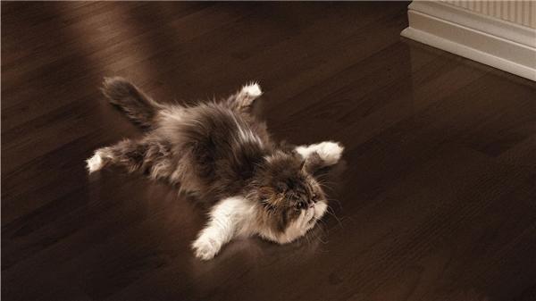 """Và đừng tưởng ở một mình thì muốn làm """"trò mèo""""gì thì làm nhé.(Ảnh: Internet)"""