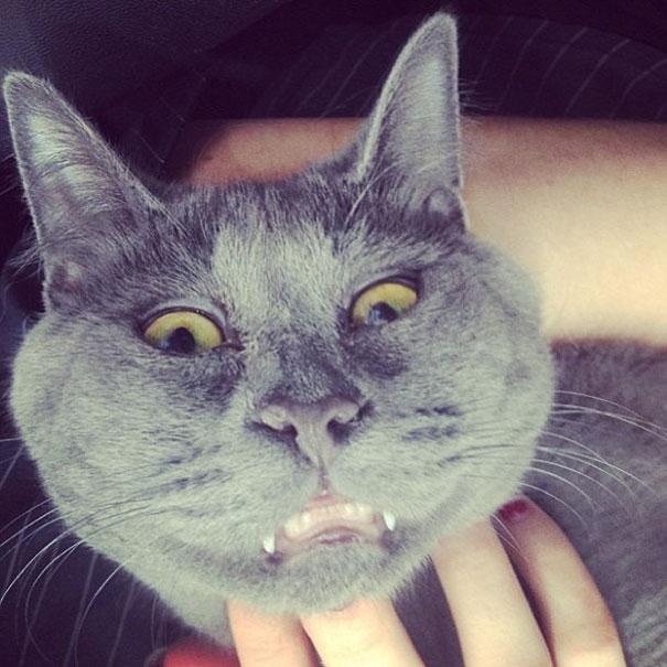 """Hoặc cũng có thể hiểu """"trò mèo"""" có nghĩa là chủ lấy mèo ra làm trò!(Ảnh: Internet)"""