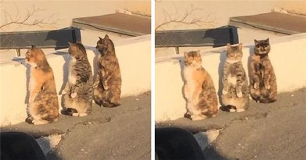 """Hội """"chị em bạn... mèo"""" luôn sẵn sàng phục vụ khán giả những """"trò mèo"""" mới nhất.(Ảnh: Internet)  Như là uống nước ngược đời này.(Ảnh: Internet)"""