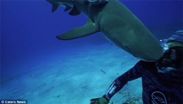Cảnh tượng hi hữu được ghi lại sau cú va với cá mập. (Ảnh: Internet)