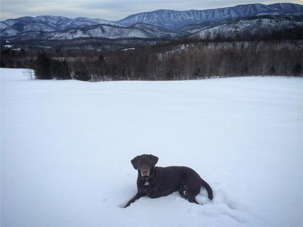 Chuyến đi cuối cùng đầy kì diệu của cô chó bị ung thư phải cắt bỏ chân