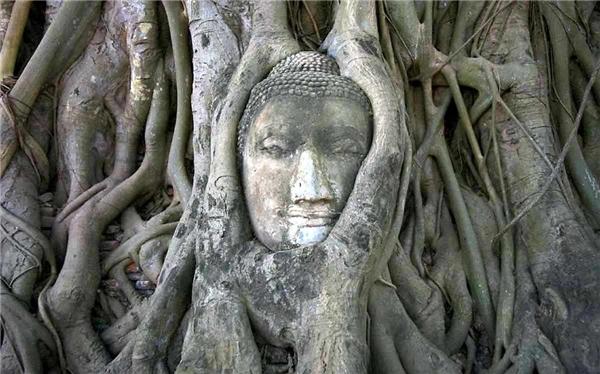 5. Thời gian chính là sức mạnh giúp cây chiến thắng sức mạnh nhân tạo.