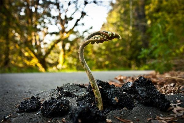 7. Mầm non mọc lên giữa con đường dạy ta về một bài học về sự kiên cường, không bao giờ bỏ cuộc trong mọi hoàn cảnh.