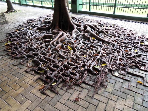 8. Không những có thể sống mà cây còn có thể sống rất hùng dũng và mạnh mẽ.