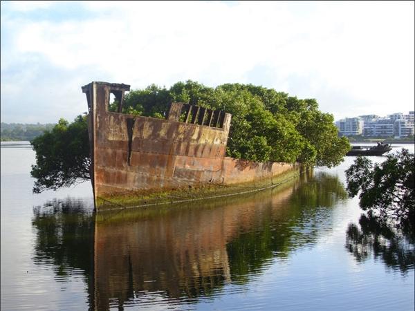 9. Không gian trên con tàu cũ hỏng đã bị thống trị bởi sức sống phi thường của những cây xanh.