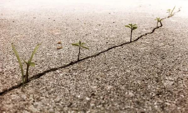 13. Chỉ cần là một khe nứt nhỏ cũng đủ để chúng vươn mình lên bất chấp mọi hoàn cảnh.
