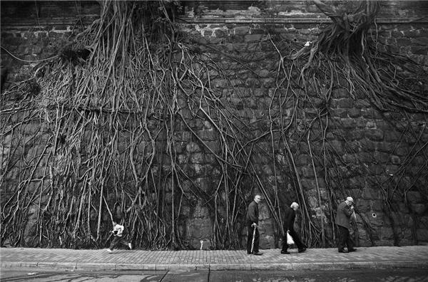 14. Ai nói rằng không có đất thì cây không sống được, hãy xem bộ dễ khổng lồ của những cái cây này sẽ thấy.