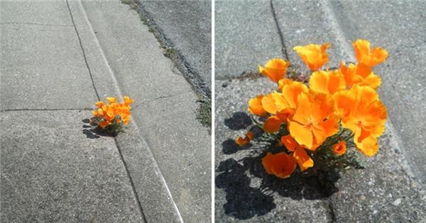 17. Không được sống giữa chốn màu mỡ phù sa nhưng cây vẫn đứng hiên ngang, kiên cường và vẫn nở hoa rực rỡ.