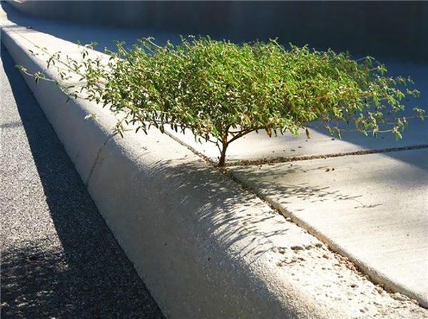19. Hình ảnh nổi bật, ấn tượng nhất trên con đường toàn gạch và bê tông.