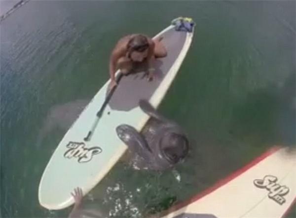 Hình ảnh đáng yêu của chú hải cẩu được ống kính nhanh chóng ghi lại. (Ảnh: cắt từ clip)