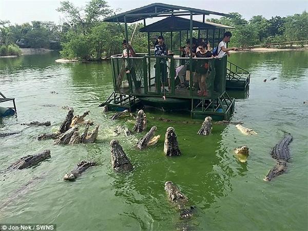 Các du khách, trong đó có cả trẻ em, có vẻ rất thích thú khi được tận tay cho cá sấu ăn.