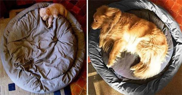 Sau 3 nămthì cái giường cũng trở nên bé nhỏ.(Ảnh: Internet)
