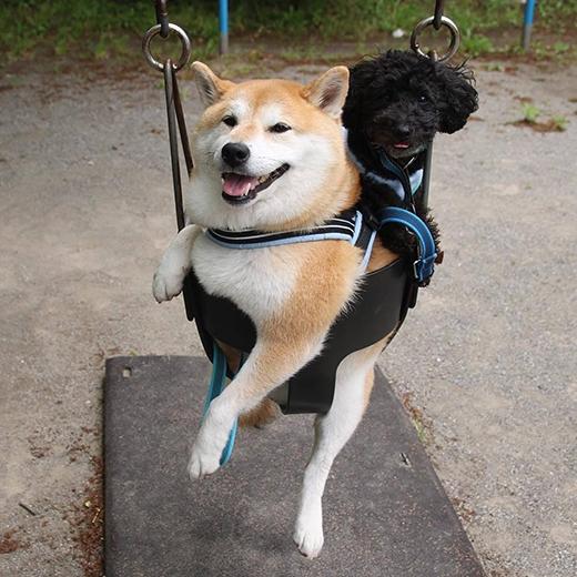 Halo cũng đáng yêu không kém gì Uni và cũng tỏ ra hạnh phúc khi được đến công viên chơi cùng cô bạn thân và cô chủ tuyệt vời.