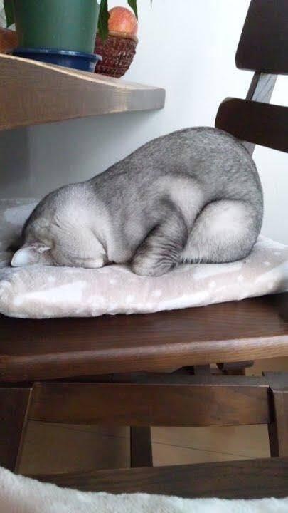 Thật ra, tớ cũng thấy mình khá được cô chủ thương, trải cho tấm đệm mềm để đi ngủ. Mà phải chi cô chủ cho thêm cái chăn, tớ khỏi phải cuộn mình mệt mỏi.(Ảnh Internet)