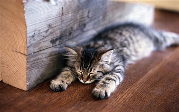 Mệt chết em rồi, ngủ thôi, ngủ thôi.(Ảnh Internet)