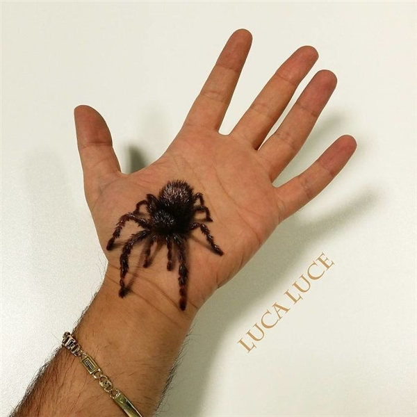Ai sợ nhện thì tránh xa ra nhé!(Ảnh: Luca Luce)